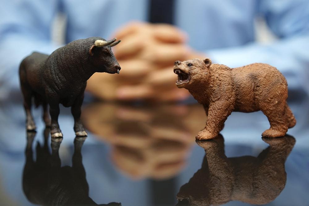 bear bull image